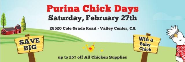 chickday2